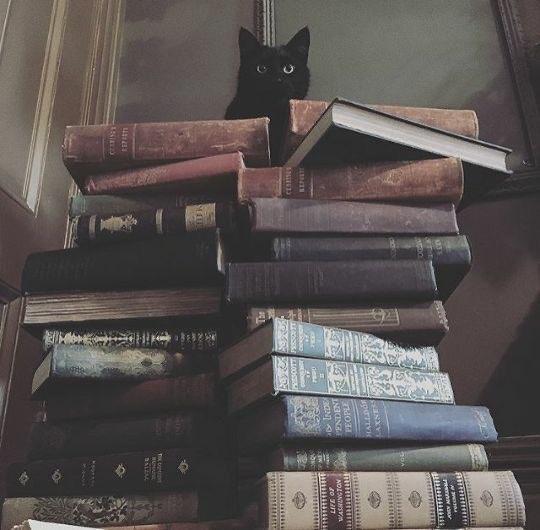 Bookworm 's profile image