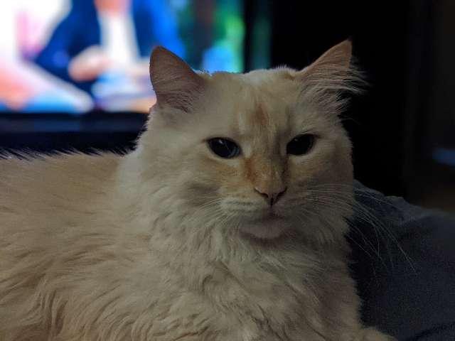 Fae 's profile image