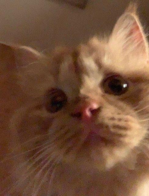bestieee 's profile image