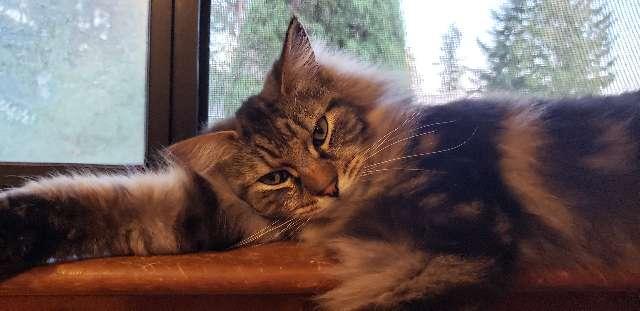 Mona E Zopfi's profile image
