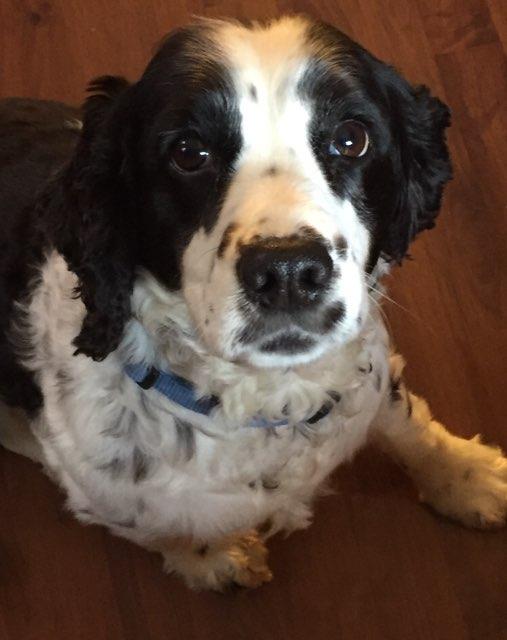 Molly 's profile image