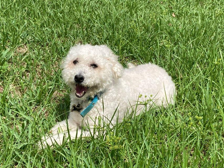 Tobbyisthebestdog 's profile image