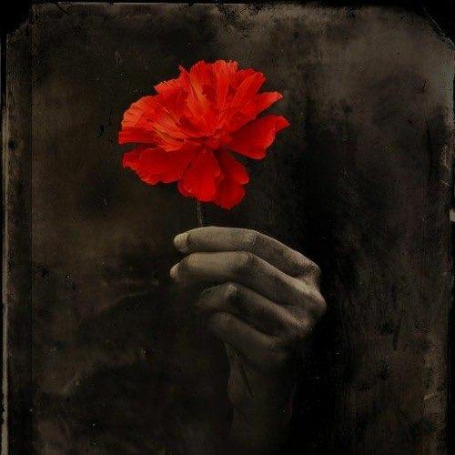 Ansley-Rose G.'s profile image