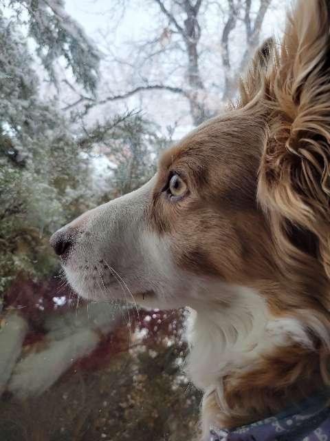 White Wolf's profile image