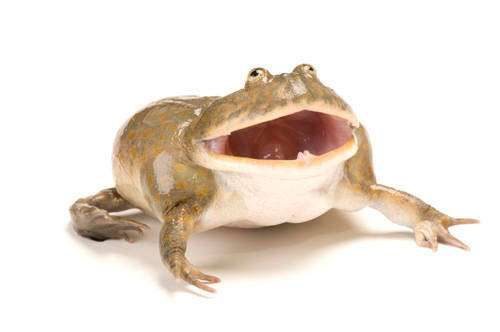 Scary Frog's profile image