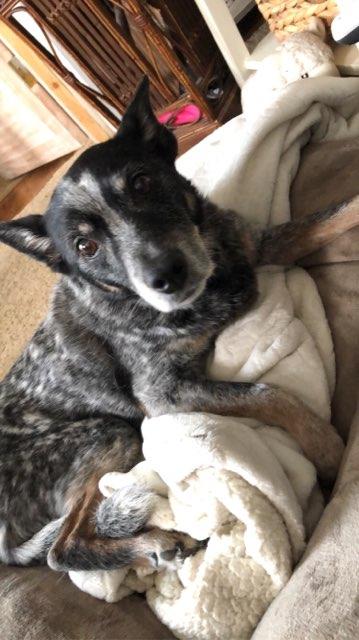 Coco 's profile image