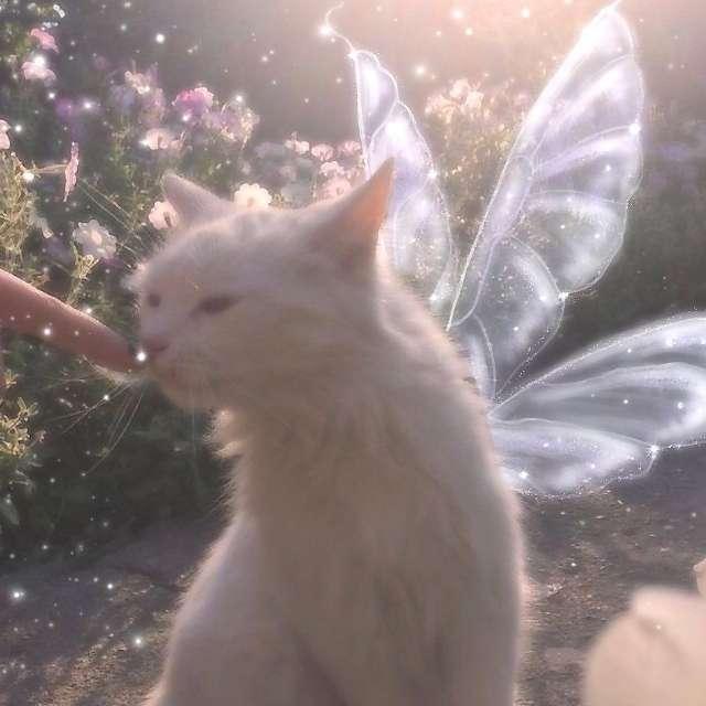 vil 's profile image