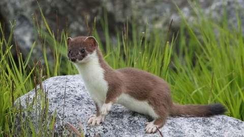 Pipe Fox's profile image