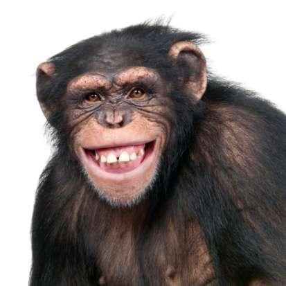 mohand gamal's profile image