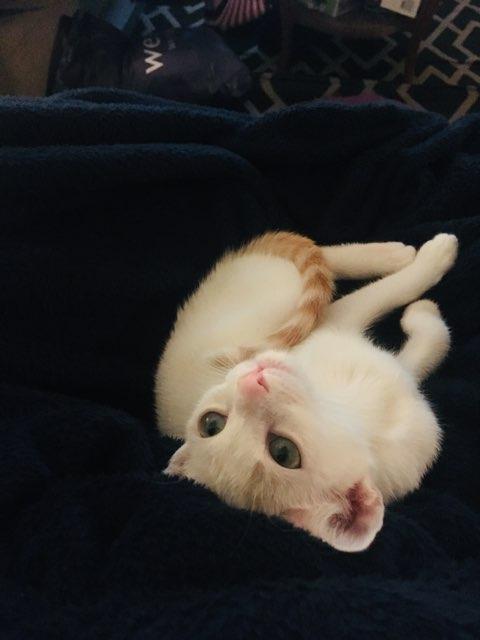 abril s's profile image