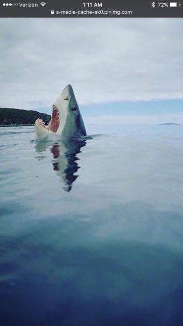 Sharkattak  profile image