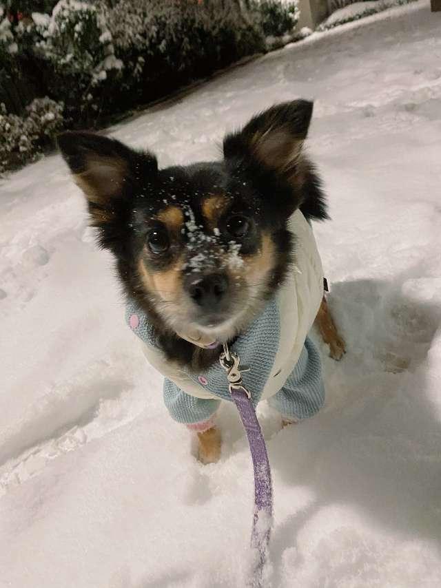 Maru 's profile image