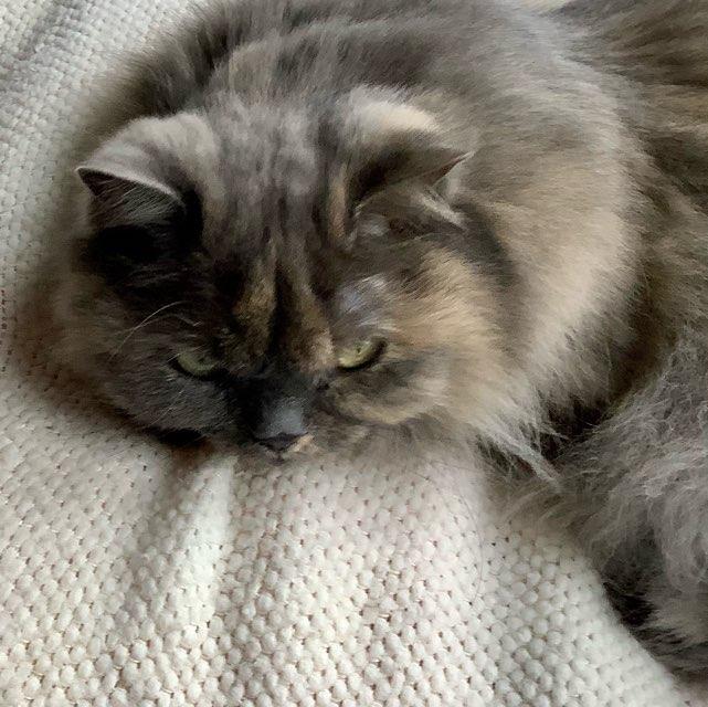 Mia's profile image