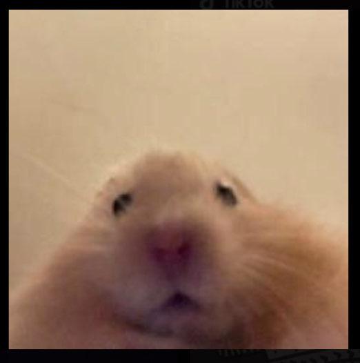 Melyssa Moreno's profile image