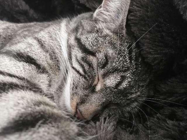 Tabitha Carson's Profile Picture