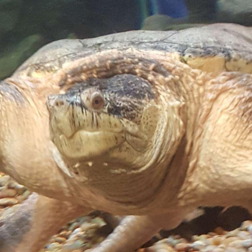Yertle The Turtle's profile image