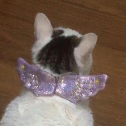 Jasmin .'s profile image