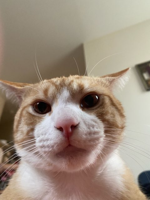 breen 's profile image