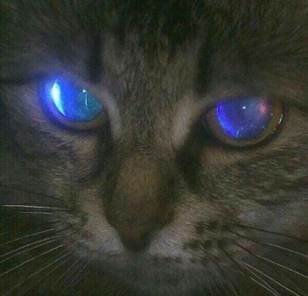 zara 's profile image