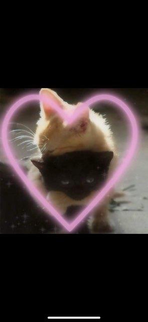 klœy💗 's profile image