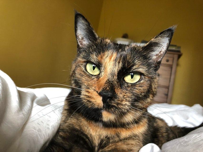 Clementine 's profile image