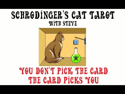 Schrodinger's Cat Reading - Are you wasting your time waiting on your soulmate to reach out? image