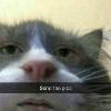 avani gregg's profile image